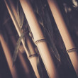 Toned picture of a bamboo plant — Stock Photo #26310545
