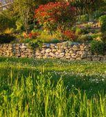 Vacker trädgård — Stockfoto