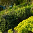 Garden on sunny day — Stock Photo
