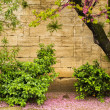 Plants and trees growing against stone wall — Stock Photo