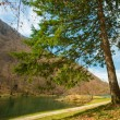 Pine tree by the lake — Foto Stock