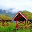 Traditional norwegian arbour standing in a lush — Photo