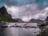 Seagulls flying over boat near moorage in Reine village, Norway — Stock Photo