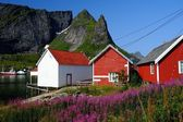 Traditional wooden houses against mountain peak in Reine village, Norway — Stock Photo