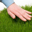 Human's hand touching fresh grass — Stock Photo