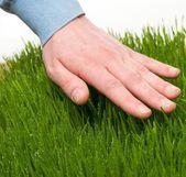 Human's hand touching fresh grass — Stock Photo