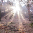Sunlight in autumn forest — Stock Photo