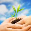 Human hands holding earth with plant sprout against blue sky — Stock Photo #43198293
