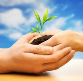Human hands holding earth with plant sprout against blue sky — Stock Photo