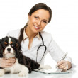 Young positive brunette veterinary woman with spaniel taking notes on tablet pc — Stock Photo #44118055