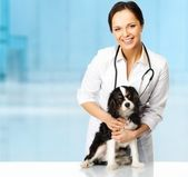 Young positive brunette veterinary woman with spaniel  — Stock Photo