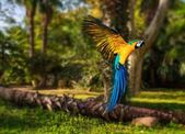 Beautiful colourful parrot over tropical background  — Foto de Stock