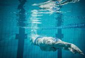 Swimmer under water in swimming pool — Stock Photo