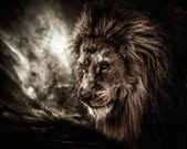 Lion against stormy sky  — Stock Photo