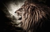 Roaring lion against stormy sky  — Stock Photo