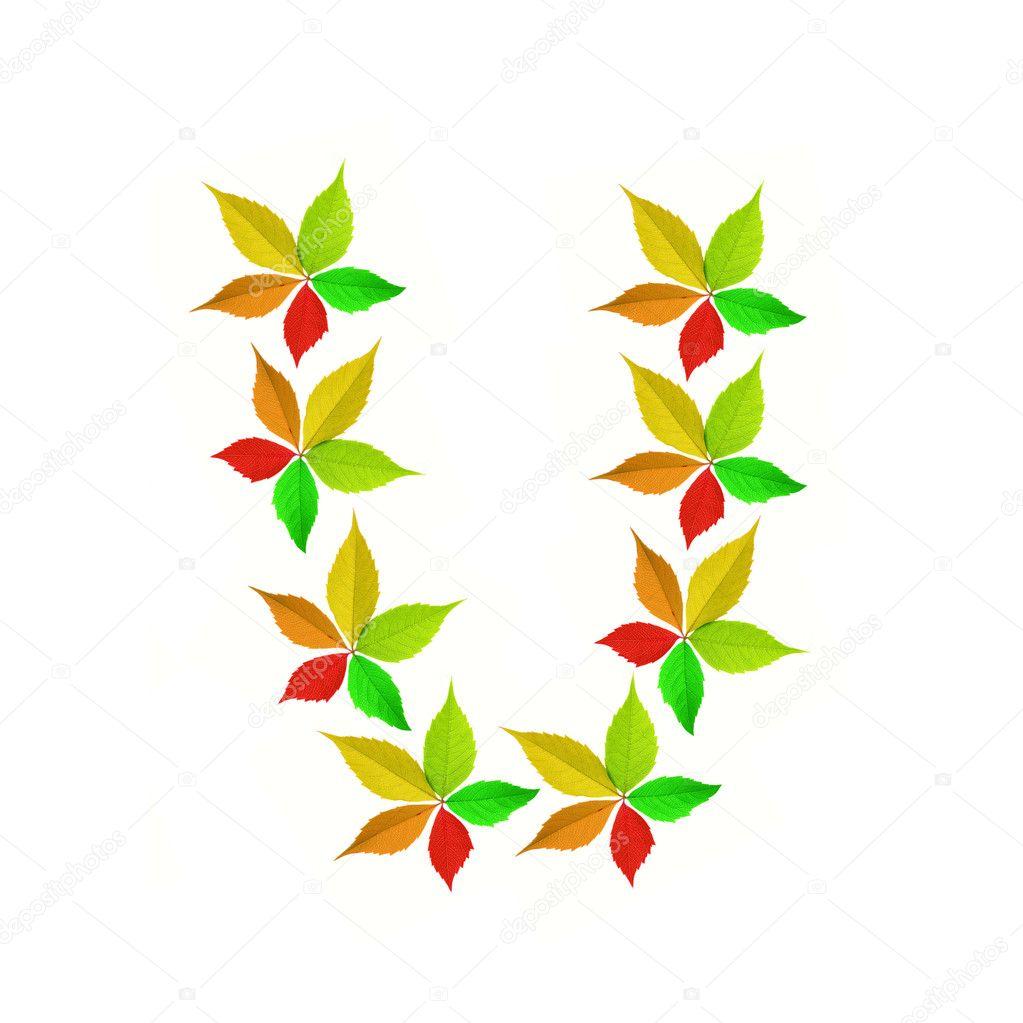 秋季字母-u