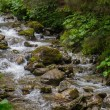 Fast mountain river in a forest — Stock Photo #51454863