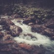Fast mountain river in a forest — Stock Photo #51454957