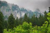 Mountain among beautiful forest — Stock Photo