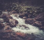 Fast mountain river in a forest — Stock Photo
