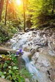 Fast river in a forest in Slovak Paradise, Slovakia — Stock Photo