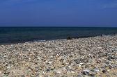 View of the stony seashore — Stock Photo