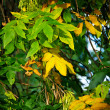 Portrait of tree with green and yellow leafs — Stock Photo