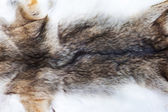 Portrait of beautiful fox skin — Stock Photo