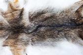 Porträtt av vackra fox hud — Stockfoto