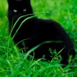 A cat is sitting in the grass - Stock Photo