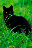 A cat is sitting in the grass — Stock Photo