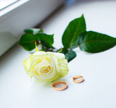 White rose and two gold rings — Stock Photo