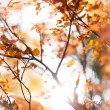 Stock Photo: Sunny snapshot of rowan autumn branches