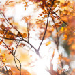 Sunny snapshot of rowautumn branches — Stock Photo #39649935