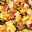 Autumn leaves on a green meadow — Stock Photo