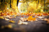 Blurry picture of orange leaves on the ground — Foto Stock
