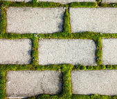 Cobbled pavement background with moss inbetween — Stock Photo