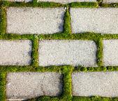 Cobbled pavement background with moss inbetween — Stok fotoğraf