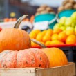 Farm pumpkins sold in wooden crates — Stock Photo