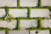 Tiled cobble stone pavement with moss inbetween — Foto de Stock