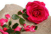 Pink rose with petals on linen fabric — Stock Photo