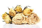 Dried flowers — Stok fotoğraf