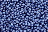 Freshly picked blueberries — Stock Photo