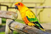 緑の翼を持つ熱帯の黄色いオウム, — ストック写真