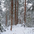 Winter forest landscape. — Stock Photo #19476663