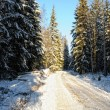 Rural road in winter forest . — Stock Photo