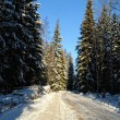 Rural road in winter forest . - Stock Photo