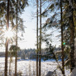 Landscape with winter sunny forest. - Stock Photo