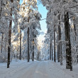 Stock Photo: Landscape with winter sunny forest.