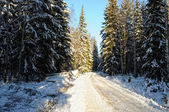 Rural road in winter forest . — Stockfoto